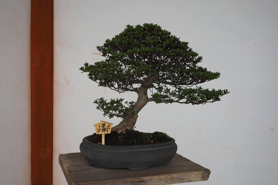 shikishi2